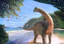 Un dinosaure géant trouvé en Égypte