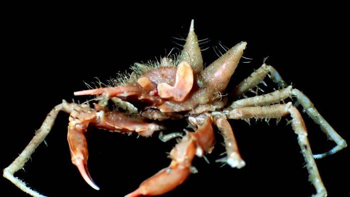 Nouvelles espèces marines exotiques découvertes au large de l'île indonésienne de Java