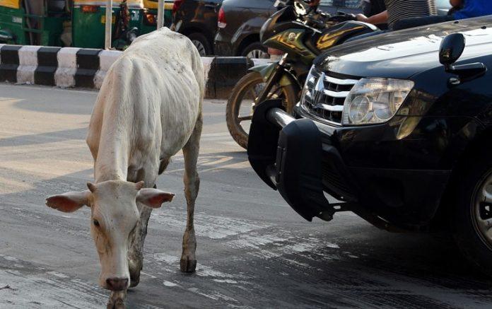 Vache sacrée : un homme battu à mort en Inde