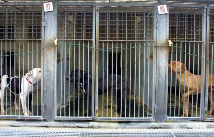 Records d'abandons d'animaux, SPA pousse un cri d'alarmes