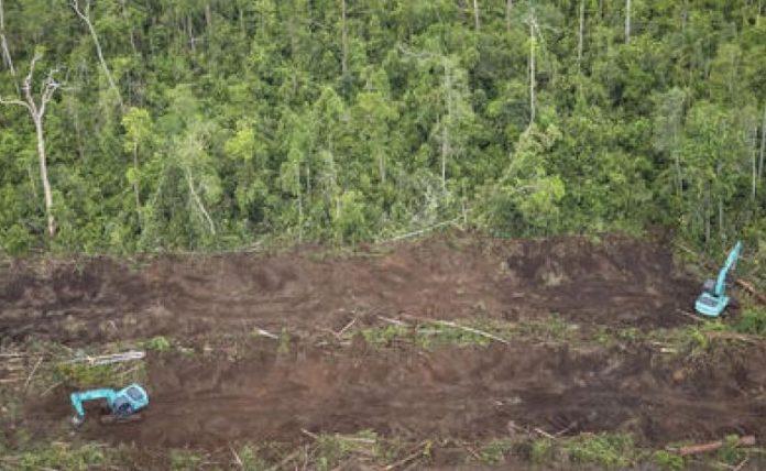 La France lance son plan contre la déforestation (Détail)