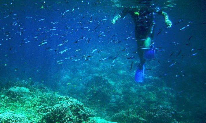 Îles Palaos interdisent la crème solaire 'Détail'