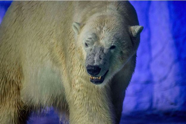 Invasion d'ours polaires dans un village russe (détail)