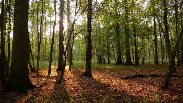 L'Australie va planter un milliard d'arbres (détail)