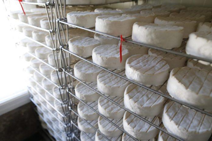 E. coli : rappel de 5.800 camemberts contaminés (détail)