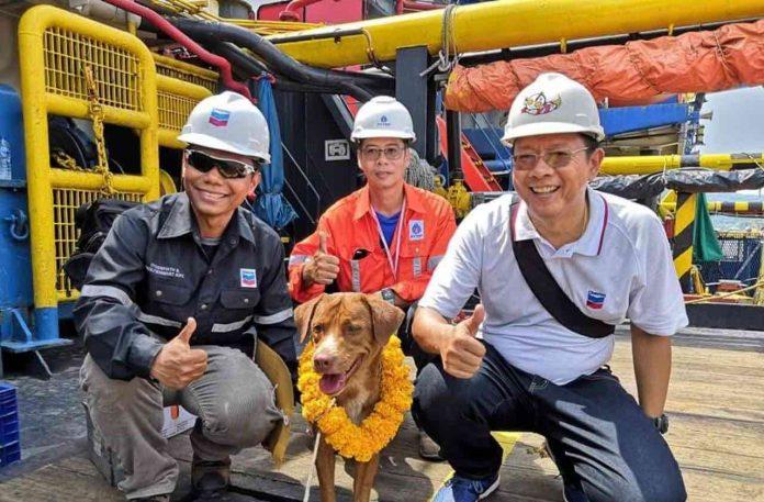 Un Chien sauvé en pleine mer, son sauveteur souhaite l'adopter