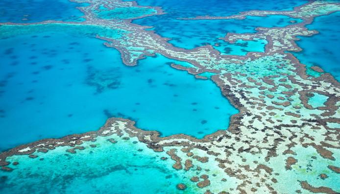 Grande barrière de corail plus menacé que jamais (détail)