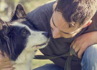 Faire cloner son chien : est-ce possible ?