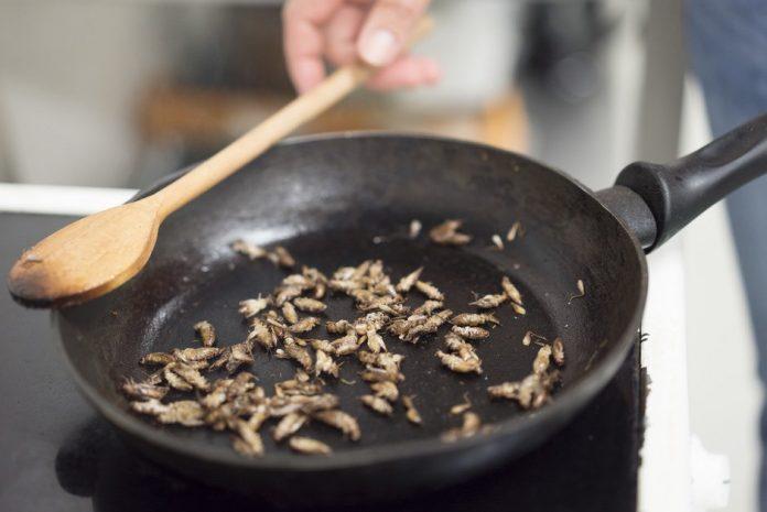 Un pain aux insectes vendu en Finlande: Bon petit-déj!
