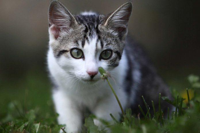 Un tueur en série de chats aurait fait plus de 400 victimes en deux ans