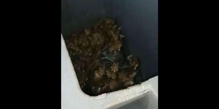 Rats à Paris : la vidéo choc d'un éboueur (Voir)