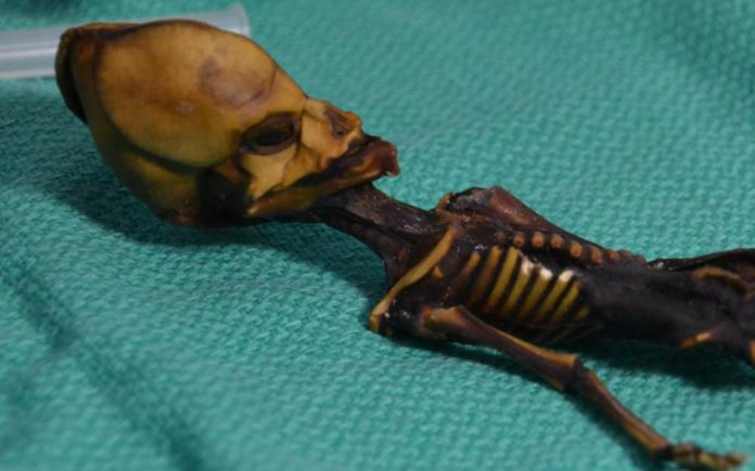 Le squelette d'Atacama n'est pas un extraterrestre, mais une petite fille