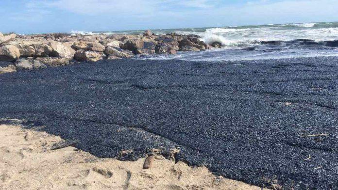 Palavas-les-flots : Invasion des méduses violettes envahissent les plages