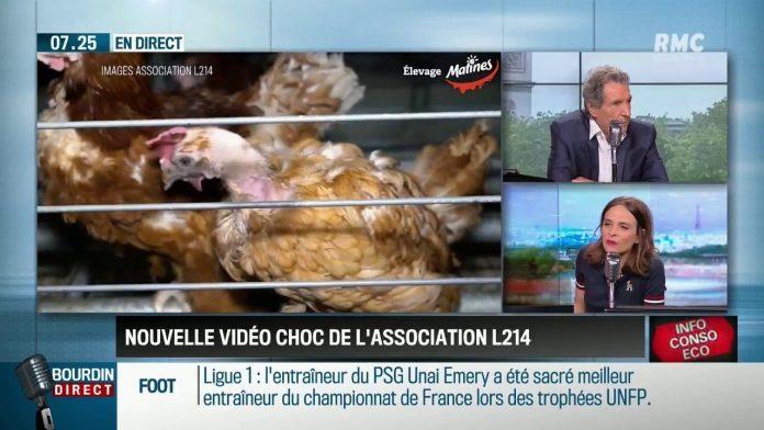 Dupin Quotidien :Vidéo choc de l'association L214