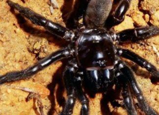 La plus vieille araignée du monde est morte