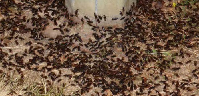 Armée d'insectes au Pentagone pour protéger les cultures