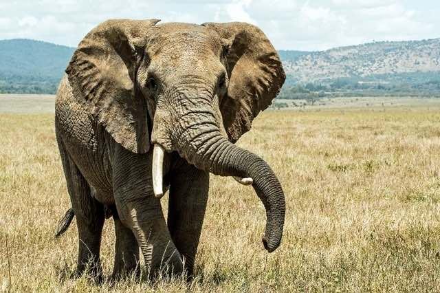 Une centaine d'éléphants sont morts à cause de la sécheresse au Zimbabwe
