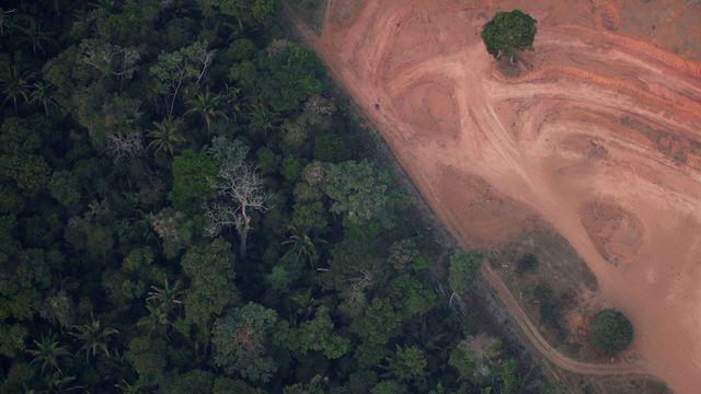Amazonie : La déforestation au plus haut depuis 2008 (détail)