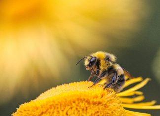 Abeilles : Deux pesticides du fabricant Dow AgroSciences interdits en France