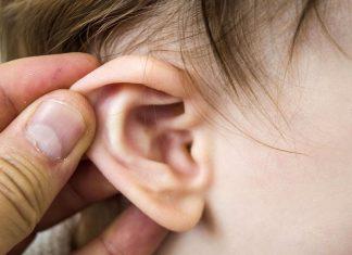 Des fossiles révèlent comment nos oreilles sont nées (étude)