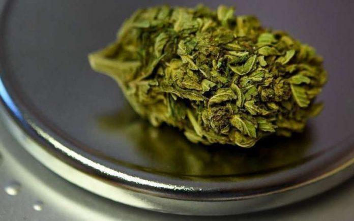 Cannabis thérapeutique : l'expérimentation en septembre (Agence du médicament)