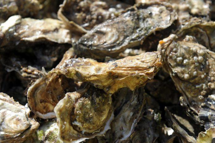 Gastro-entérite : Huîtres contaminées dans la Baie du Mont-Saint-Michel (détail)