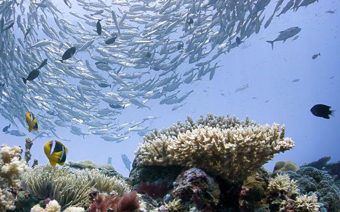L'archipel de Palau interdit les crèmes solaires toxiques (détail)