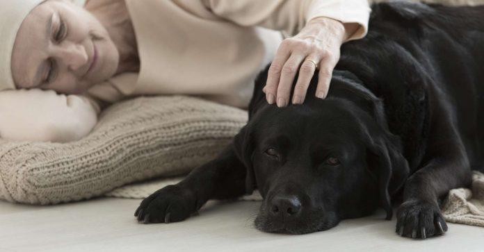 Des chiens pour diagnostiquer le cancer du sein (détail)