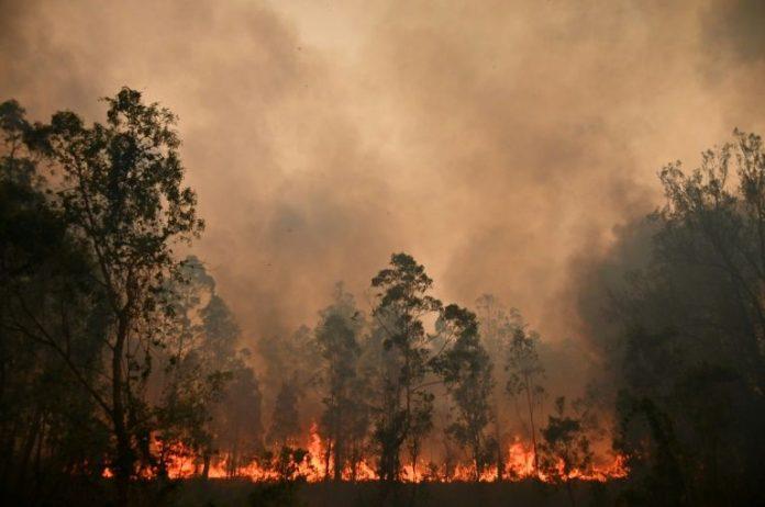 Australie : la fumée des récents incendies à l'origine de centaines de décès (détail)