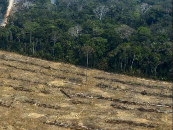«L'Amazonie est un réservoir à virus», dit un scientifique brésilien