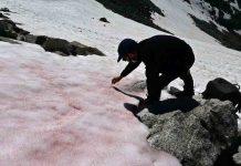 Italie: La mystérieuse neige rose du glacier Presena (Image)