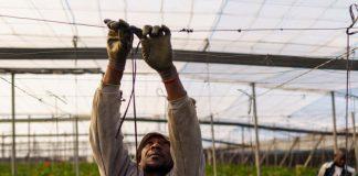 Espagne : Un coup de chaleur provoque la mort d'un ouvrier agricole