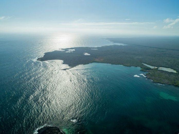 Nouvelles espèces marines découvertes aux Galapagos (détail)