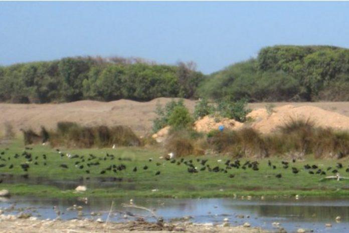 Le Maghreb a conservé des traces de la dernière période humide africaine (étude)