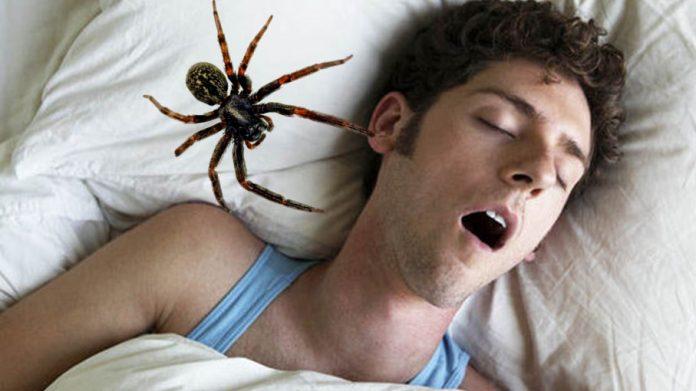 Sommeil : voici combien d'araignées nous avalons en dormant au cours de notre vie selon les scientifiques, Le nombre est surprenant (étude)