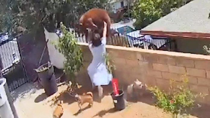 Une Américaine repousse un ours à mains nues dans son jardin (VIDEO)