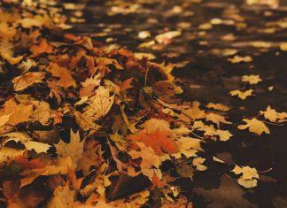L'équinoxe d'automne aura lieu ce mercredi 22 septembre 2021